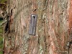 <em> Metasequoia glyptostroboides</em> Bark