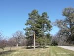 <em>Pinus sylvestris</em> Whole plant/Habit