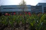 Spring 2012_01