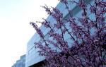Spring 2012_02