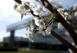 Spring 2012_04