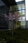Spring 2012_05