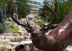 Waterfall Deer 08