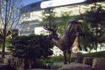 Waterfall Deer 09